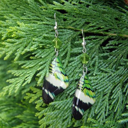 Náušnice motýl - mot7