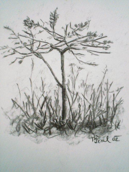 Stromek. Autorská kresba.