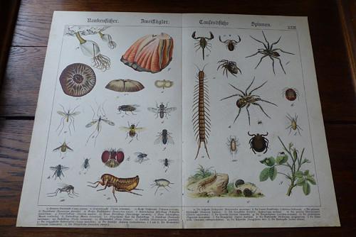 Originál litografie z 19. století, hmyz, pavouci