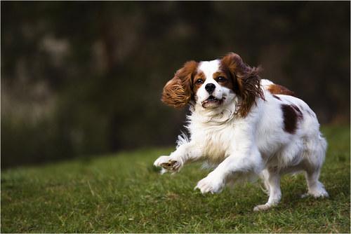 ...vesele skáče malý psík...