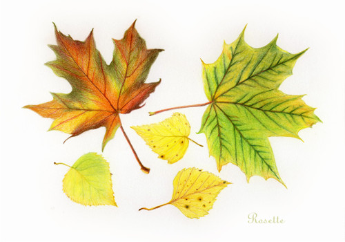 Podzimní listy - kresba / od Rosette   Fler.cz