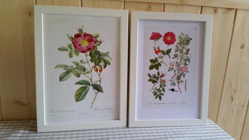 Botanický obrázek ze starého herbáře - A4, 2 KS