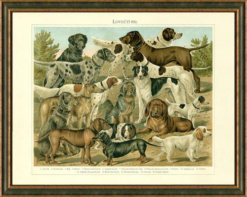 Obraz: plemena loveckých psů