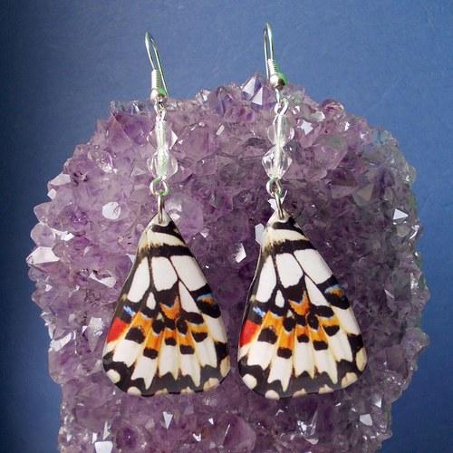 Náušnice motýl - mot17