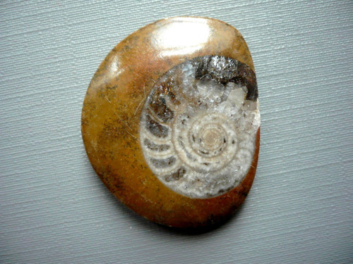 Amonit v matečné hornině 34 mm, č.16