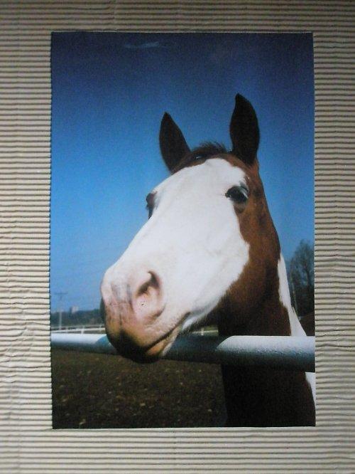 Z cyklu Krása koně..4