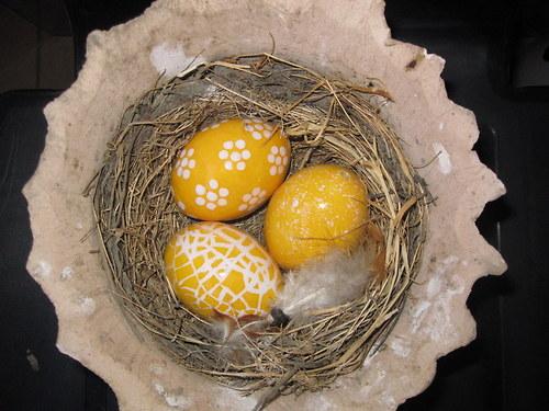 žluté  hnízdo