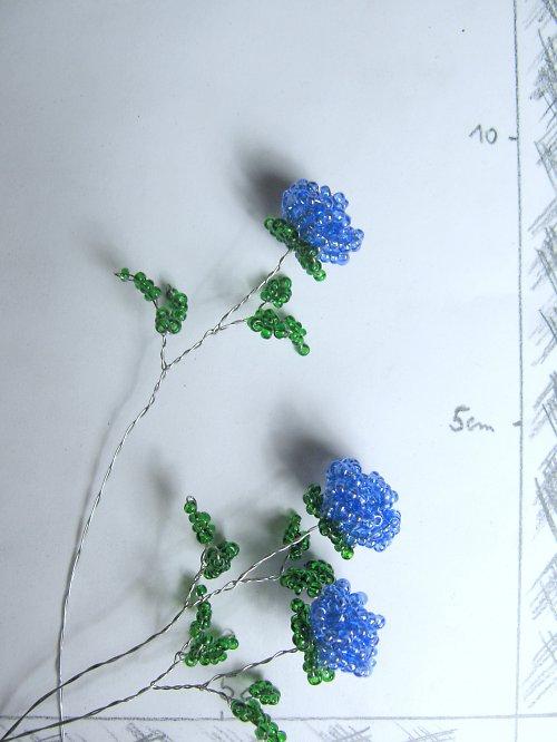 Růže korálková modrá