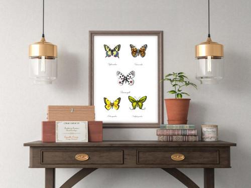 Motýli A3 reprodukce autorských kreseb