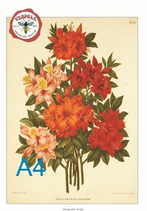 Květiny, kytice