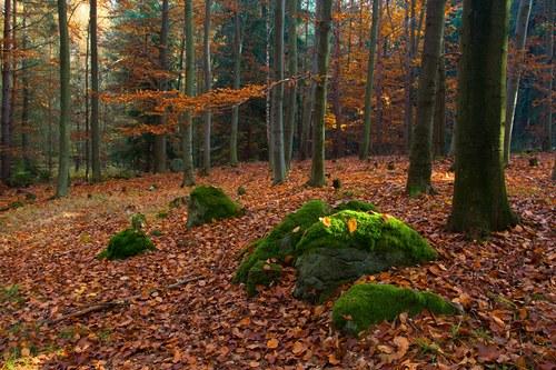 Podzimním lesem