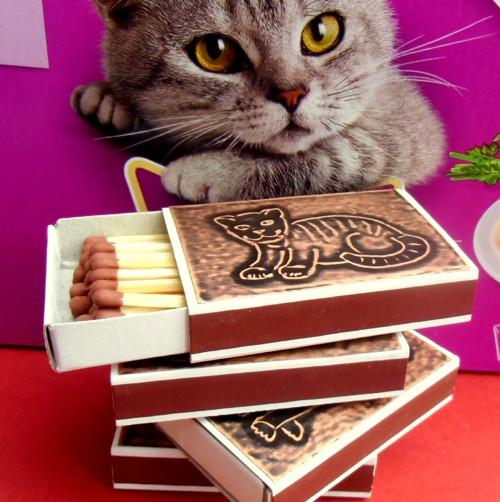 Měděné zápalky - malé kotě
