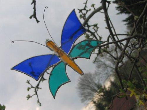 motýl modro-tyrkysový