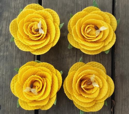 Vosková růže přírodní.