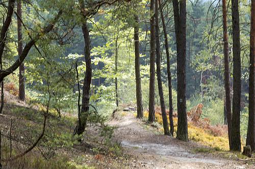 Cestou lesem na Vlhošť