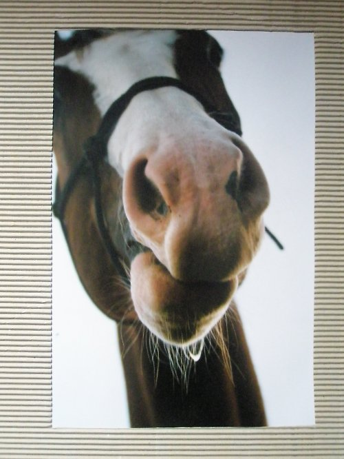 Z cyklu Krása koně..5