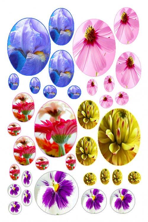 makro květy