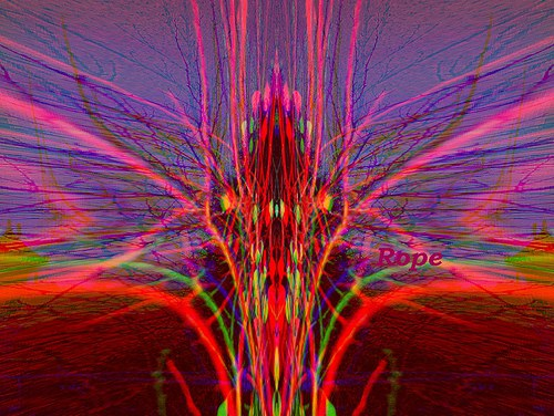Růžový BROUK digifotografie mailem