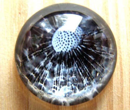 Kabošon sklo III, pampeliška , 20 mm