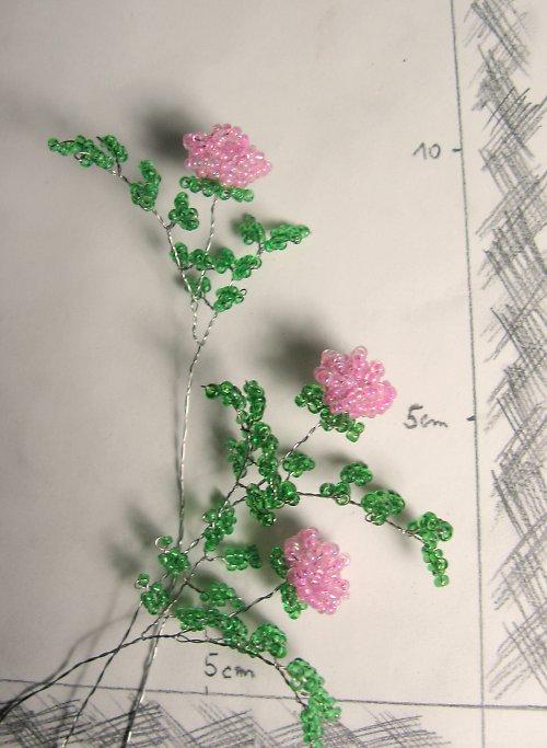 Růže korálková růžová vícelistá