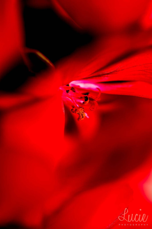 Květ II