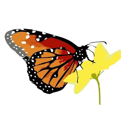 Motýlci pro radost