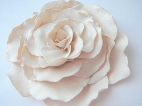 Růže krémová.