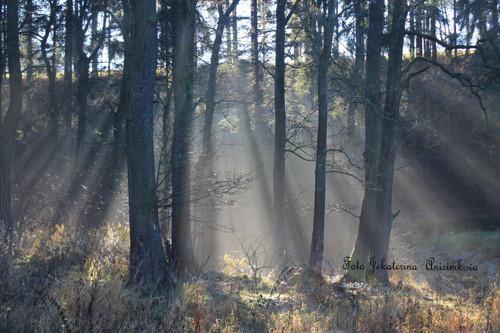 Podzimní les a světlo.