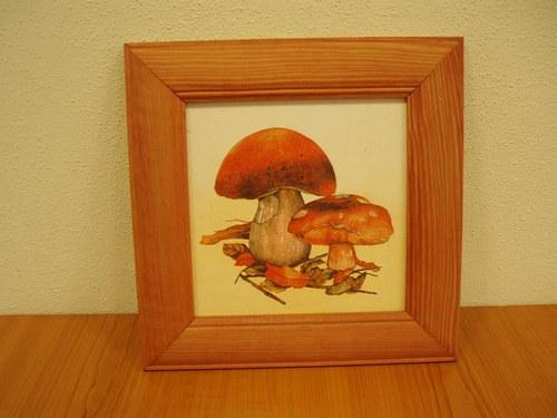 Obrázek - houby