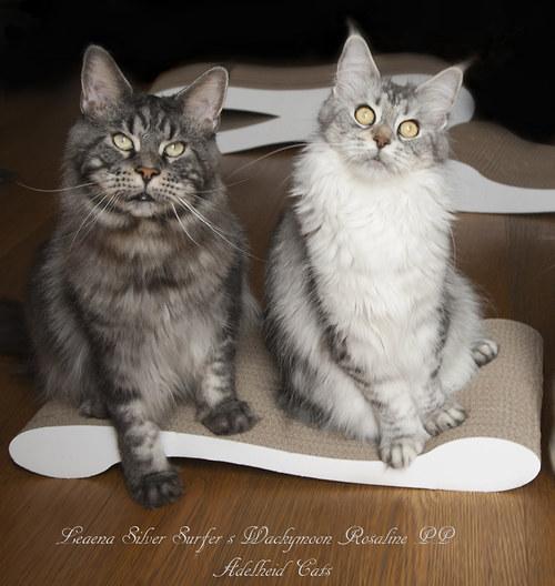 Kartonové kočičí škrabadlo - kanape M