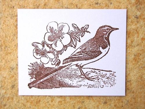 Ptáček s třešňovými květy