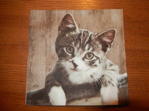 Ubrousek na decoupage - roztomilé kotě