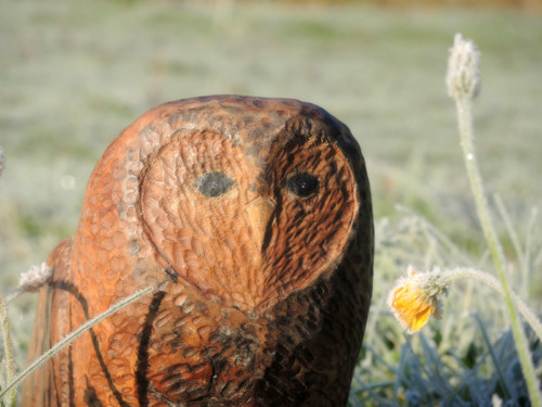 Ochránci přírody ... sova symbol moudrosti
