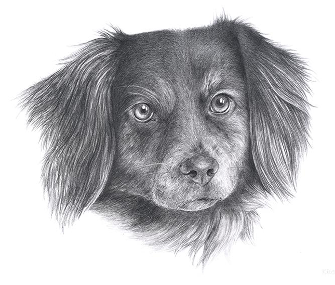Kresleny Portret Pejska Tuzkou Zbozi Prodejce Alofu Fler Cz