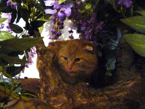 Ručně vyrobený strom pro kočky  (180-190cm)