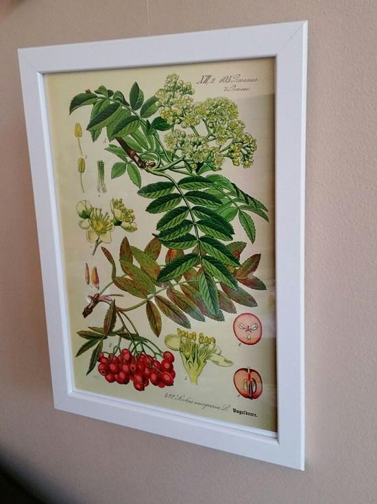 Botanické obrázky ze starého herbáře