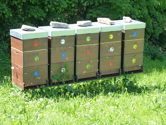naše včely